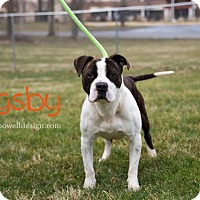 Adopt A Pet :: Rigsby - Kendallville, IN