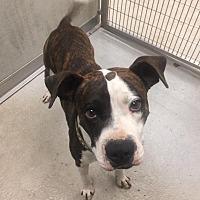 Adopt A Pet :: Rex - Humble, TX