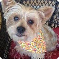Adopt A Pet :: Thor - North Port, FL