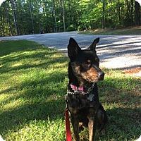 Adopt A Pet :: Clover - Hayes, VA