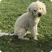 Adopt A Pet :: William - Tumwater, WA