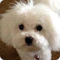 Adopt A Pet :: Abby - La Costa, CA