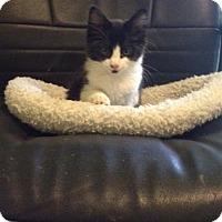 Adopt A Pet :: Tio - Monroe, GA
