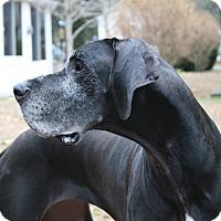 Adopt A Pet :: Tilly - Phoenixville, PA