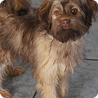 Adopt A Pet :: Rusty - Yuba City, CA