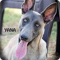 Adopt A Pet :: Yana - Patterson, CA