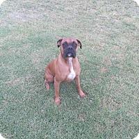 Adopt A Pet :: Tyson - Santa Monica, CA
