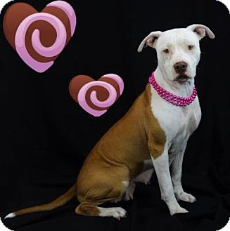 Terrier (Unknown Type, Medium)/Hound (Unknown Type) Mix Dog for adoption in Kingwood, Texas - Lilly