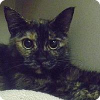 Adopt A Pet :: Eden - Hamburg, NY