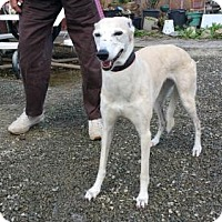 Adopt A Pet :: polly - Yucaipa, CA