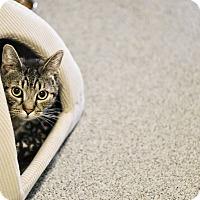 Adopt A Pet :: Tyson - Lincoln, NE