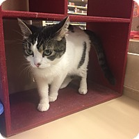 Adopt A Pet :: Mercy - Cincinnati, OH