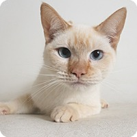Adopt A Pet :: Cinnamon - Redding, CA