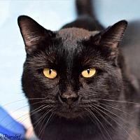 Adopt A Pet :: Marvin Pampa - Denver, CO