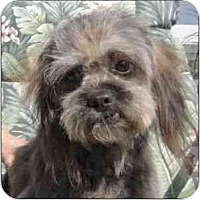 Adopt A Pet :: Jojo - N. Fort Myers, FL