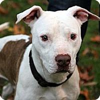 Adopt A Pet :: Buster - Dallas, GA