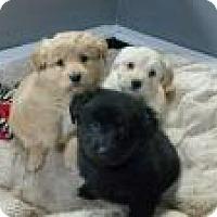 Adopt A Pet :: Ella's babies - Marlton, NJ