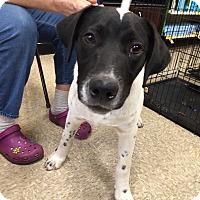 Adopt A Pet :: Speckles - Schertz, TX