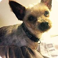 Adopt A Pet :: Roxie - ROME, NY
