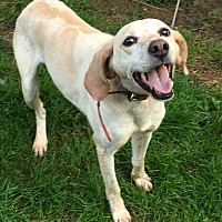 Adopt A Pet :: Hunter - Staunton, VA
