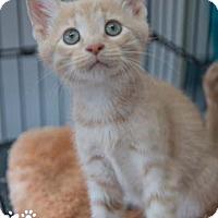 Adopt A Pet :: Connor - Merrifield, VA