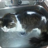 Adopt A Pet :: Jerry (Courtesy Listing) - Richmond, VA
