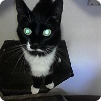 Adopt A Pet :: Alfie - Medford, NY
