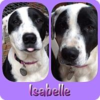 Adopt A Pet :: Isabelle - Ravenna, TX