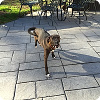 Adopt A Pet :: Liberty - Colonial Heights, VA