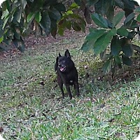Adopt A Pet :: Chico - Ormond Beach, FL