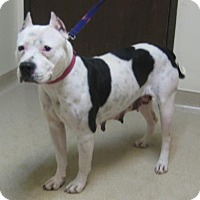 Adopt A Pet :: Dutchess - Gary, IN