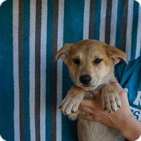 Adopt A Pet :: Athena - Oviedo, FL