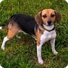 Adopt A Pet :: Lou Ann