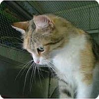 Adopt A Pet :: Princess - Winter Haven, FL