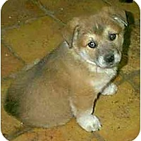 Adopt A Pet :: Snowflake - dewey, AZ