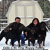 Adopt A Pet :: Eddie - Darlington, MD