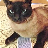 Adopt A Pet :: Aramis - Davis, CA