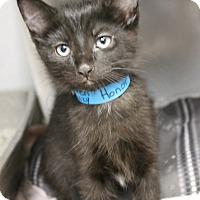 Adopt A Pet :: Honor - Medina, OH