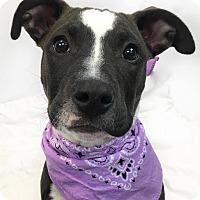 Adopt A Pet :: Gianna - Toledo, OH