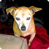 Adopt A Pet :: Browney - San Francisco, CA