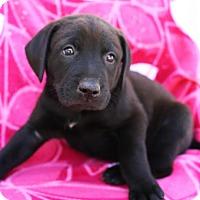 Adopt A Pet :: Horik - Spring Valley, NY