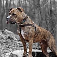 Adopt A Pet :: Tyson - Cranston, RI
