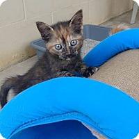 Adopt A Pet :: Biscotti - Umatilla, FL