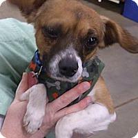 Adopt A Pet :: Dudley - Georgetown, KY