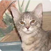 Adopt A Pet :: Hailiely - Milwaukee, WI