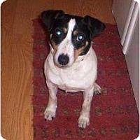 Adopt A Pet :: Buttons - Allentown, PA