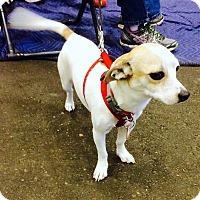 Adopt A Pet :: Lefty - Scottsdale, AZ