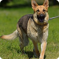 Adopt A Pet :: Rue - Dacula, GA