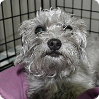 Adopt A Pet :: Lily - Meridian, ID