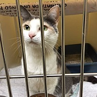 Adopt A Pet :: Hattie - Johnson City, TN